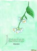 Жасмин (Jasmine)